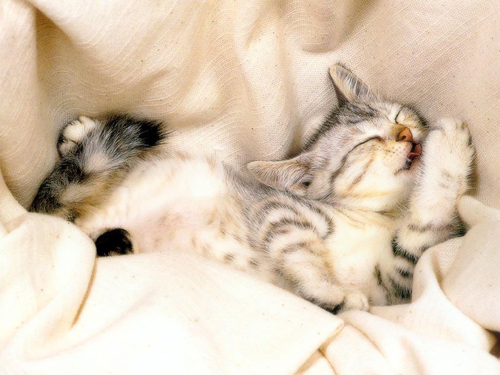 Pisicuță care doarme liniștită