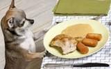 essen sau fresen în germană a mânca